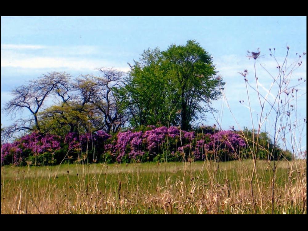 Libery Grove, WI (1).jpg