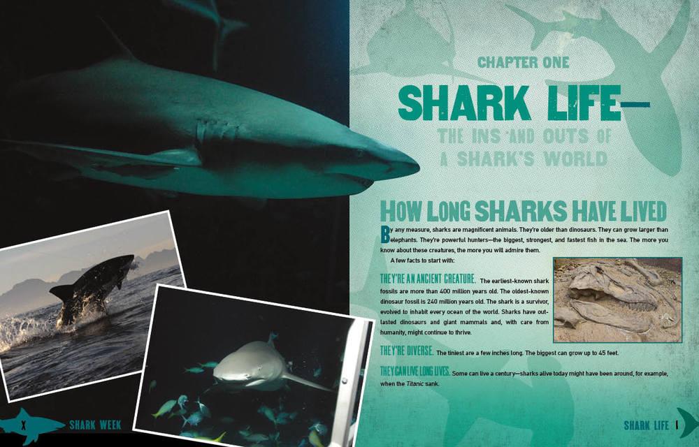 SharkWeek_3.jpg