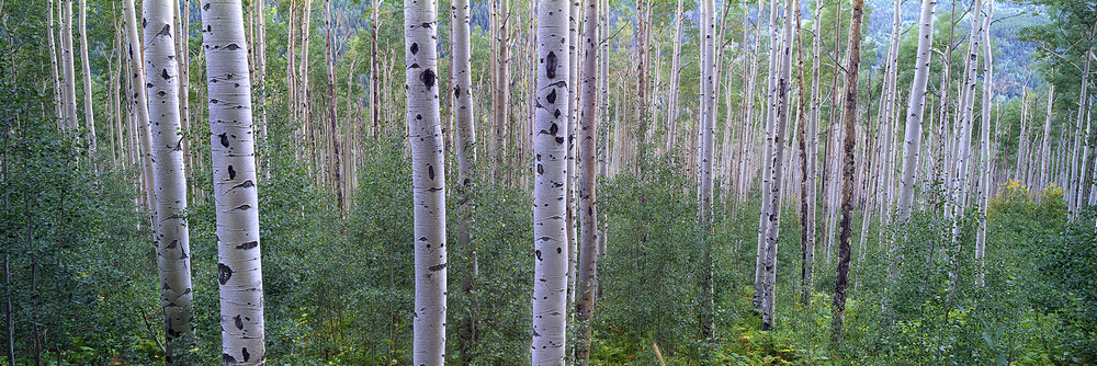 Summer Grove - Aspen Colorado