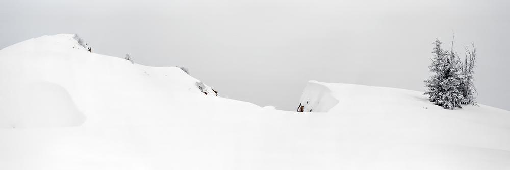 Snow Drift  (web).jpg