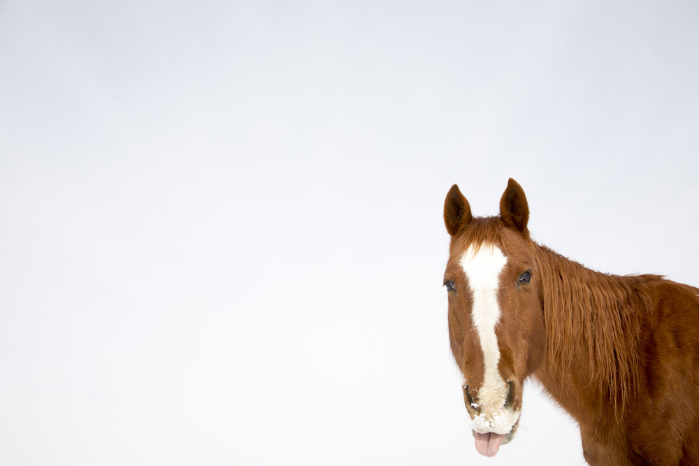 Horse10w.jpg