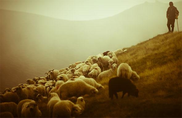 pastor_ovelhas.jpg