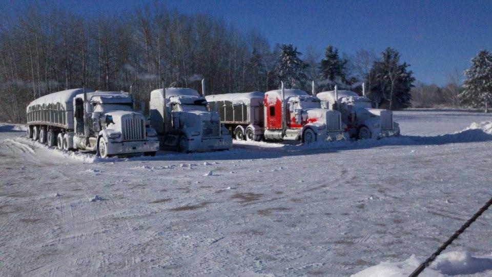 Trucks in white.jpg
