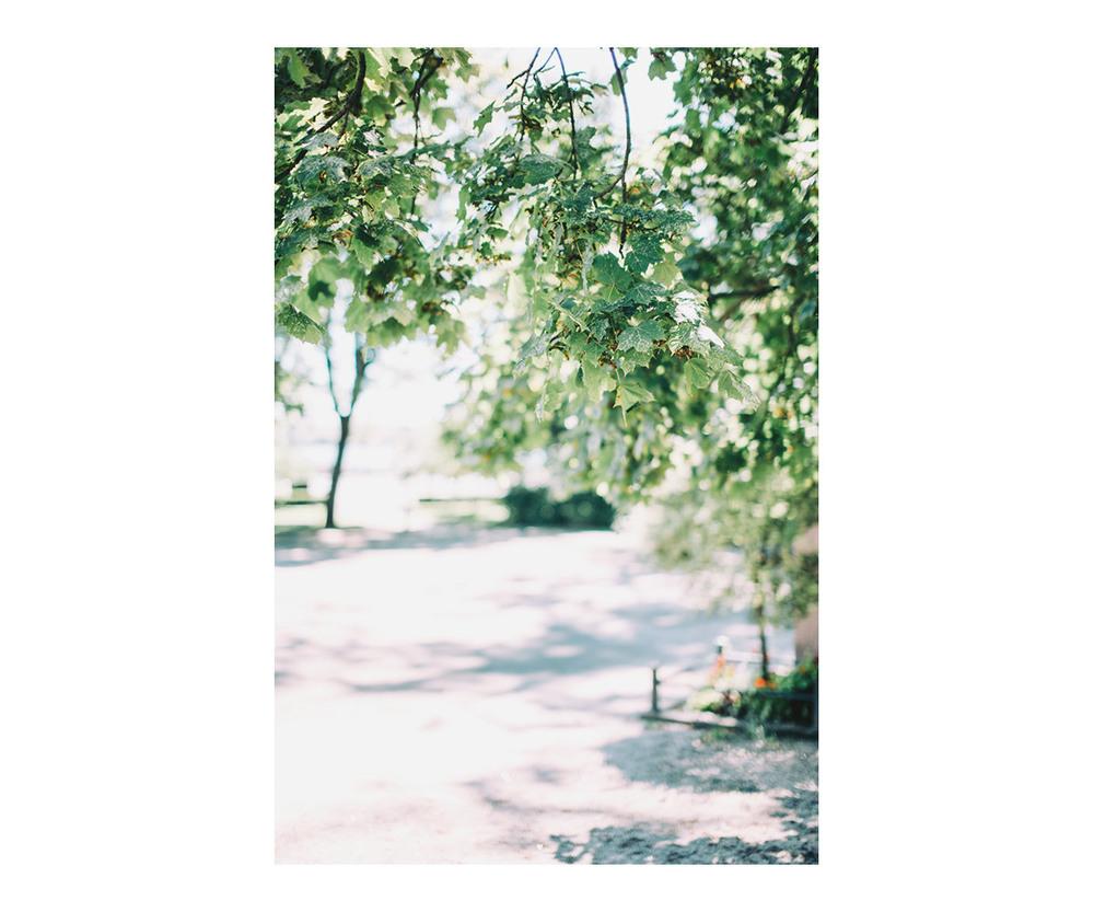 400h_trees.jpg