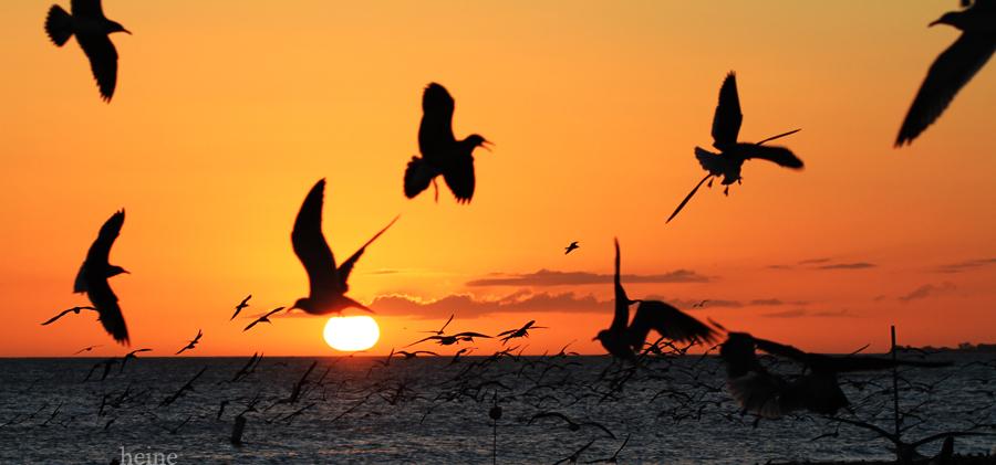More Wild Birds