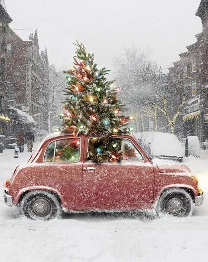 3+Christmas+Tree+and+VW+bug+in+snow.jpg