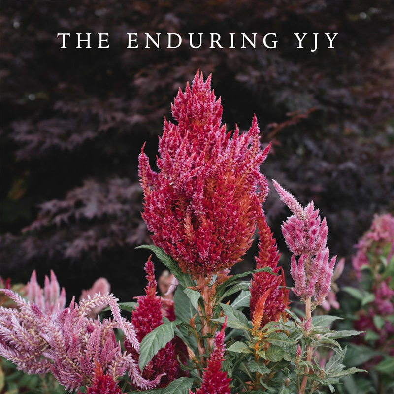YJY - The Enduring YJY