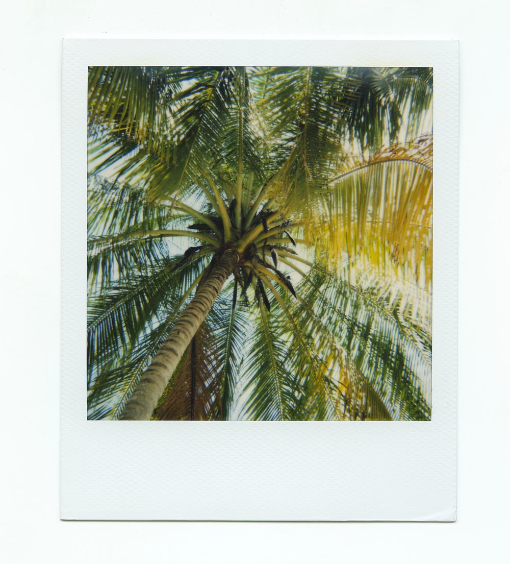 cr_palmtree.jpg
