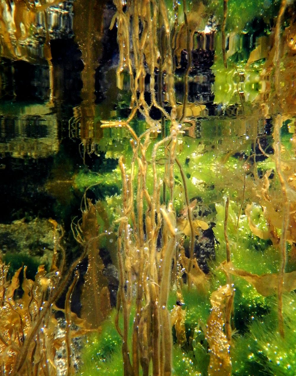 Seaweed37.jpg