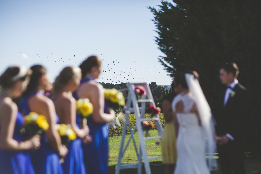 southern highlands winery wedding_063.jpg