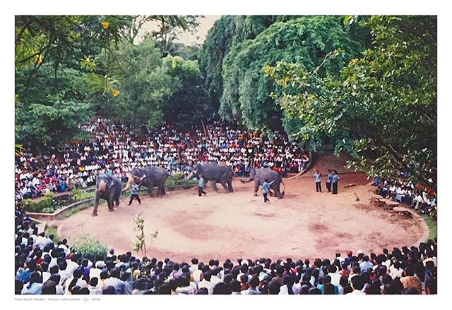 Elephant Dance... I took a this photo many years ago while I was visiting Sri Lanka with my dad's vintage Nikon film camera. I believe the film stock I used was the Fijifilm Superia 800... BTW... I scanned this photo using the awesome new app from Google called PhotoScan. . . .  #srilanka #travel #travelphotography #bestvacations #travelawsome #earthofficial #picoftheday #awesomeearth #bestplacestogo #awesomeglobe #destinationearth #artofvisuals #traveldeeper #sceniclocations #earthofficial #globaldaily #beautifuldestinations #jaw_dropping_shots #global_hotshotz #special_shots #worldbestgram #film #googlephotoscan