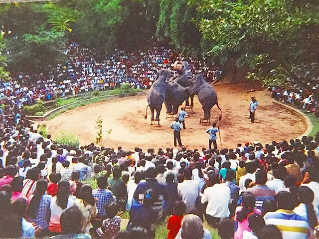 Elephant Circus... I took this photo many years ago while in Sri Lanka with my dad's vintage Nikon film camera