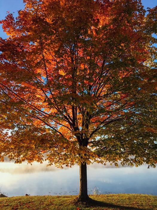 Big Tree .jpg