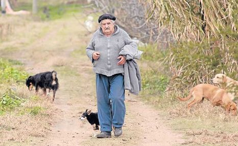 Imagen-Jose-Mujica-cultiva-arvejas-uruguay_ECMIMA20120909_0111_39.jpg