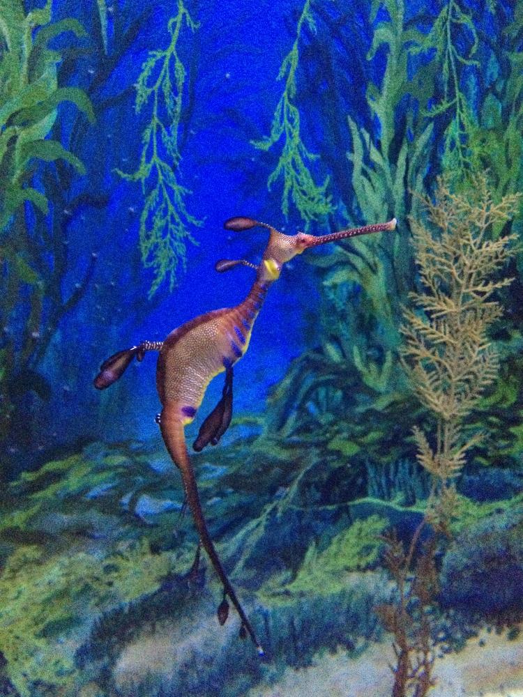 Mind-blowing seahorse