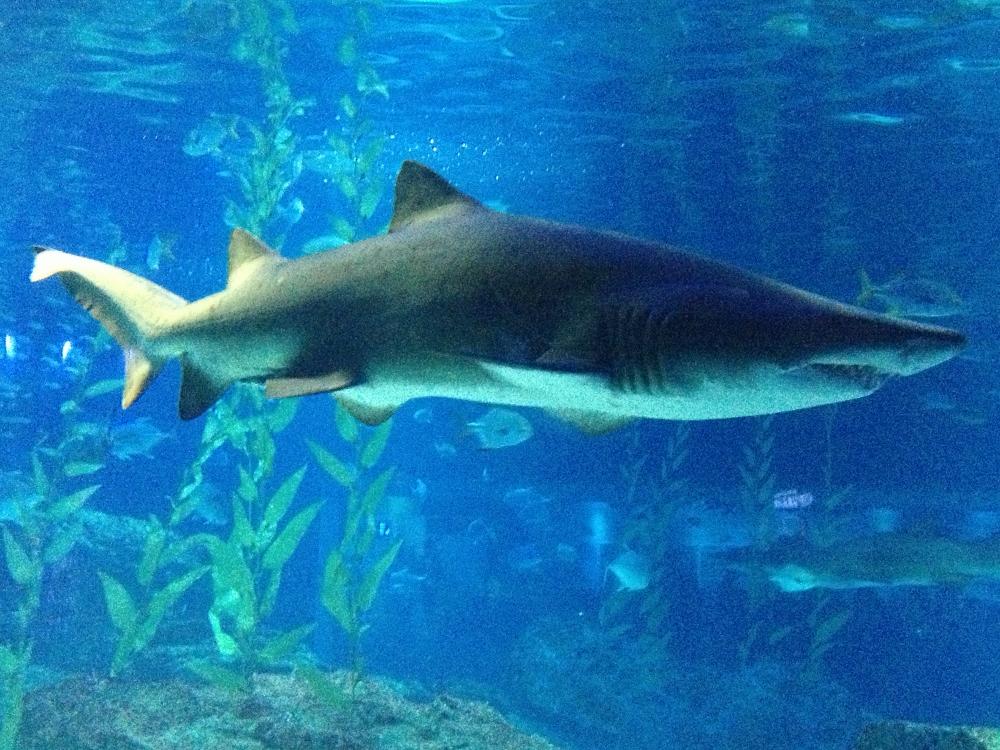 Evil shark 2