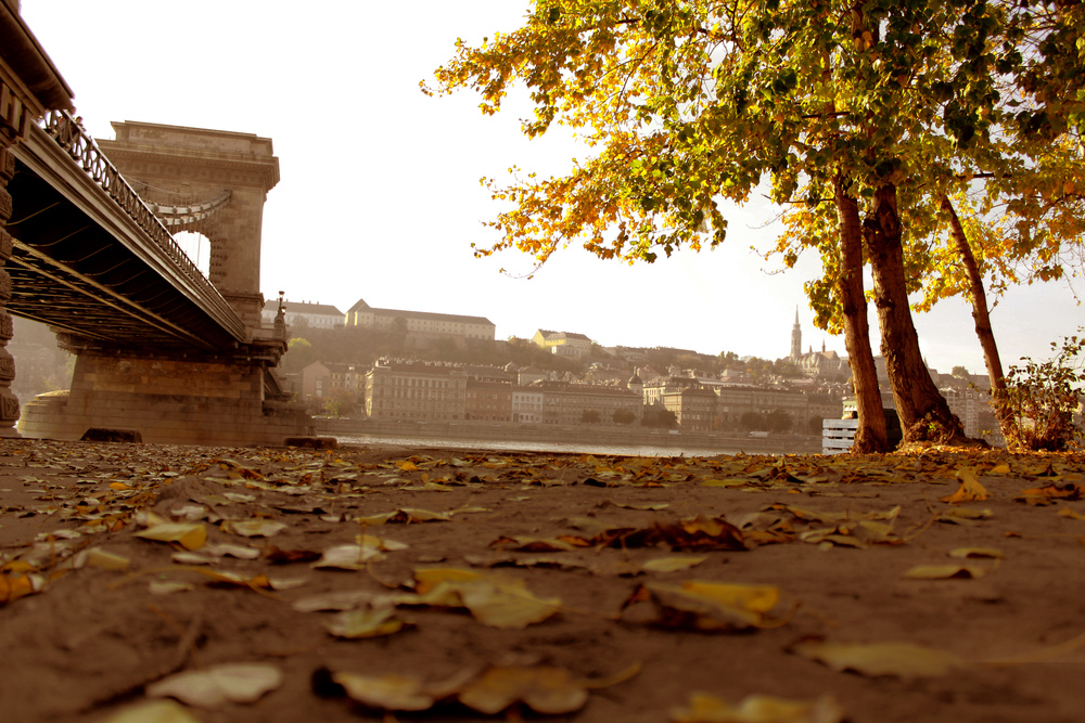 Fall_leaves_2.jpg