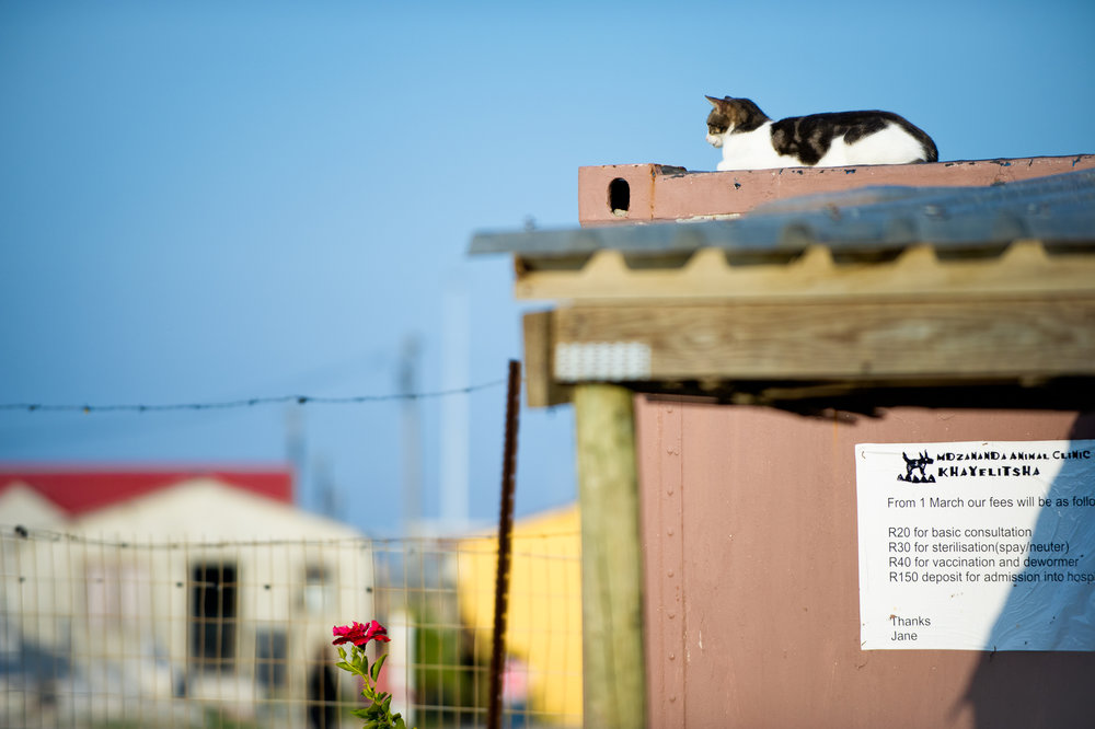 A resident cat sitting on the roof serves as the unofficial greeter at Mdzananda Animal Clinic.