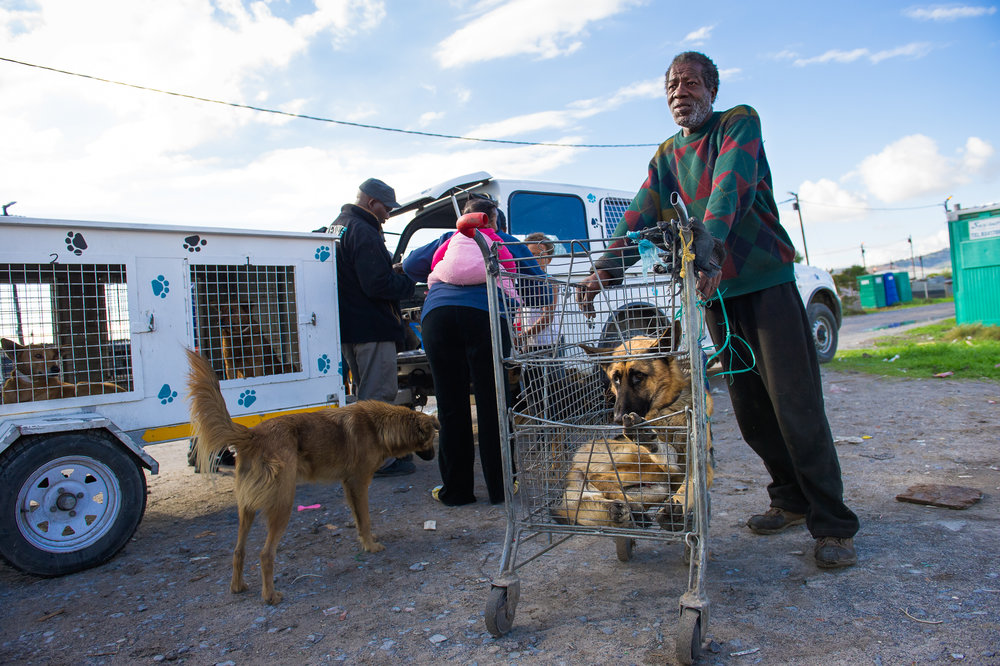 Transportation to the clinic is an issue for most of Khayelitsha's residents, especially if they have critically ill pets. These mobile units are designed to reach out to those who can't access the physical clinic but they also build visibility and trust in the community.