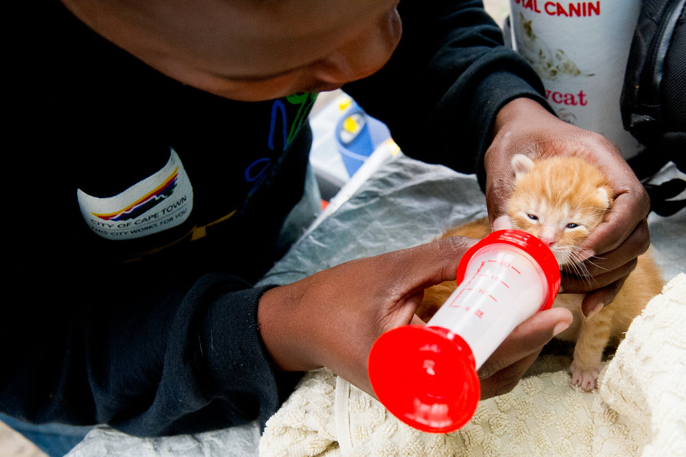 With the mother cat gone, Sotywinga and the rest of the staff at Mdzananda took on the round-the-clock job of getting these kittens off to a healthy start.