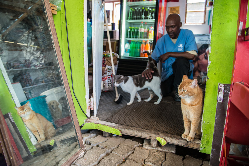 Zen, a resident cat at the clinic, spends most of his time lounging around the charity shop. The store is run jointly by a local resident and Mdzananda, and sells pet necessities as well as second hand clothing and home goods.