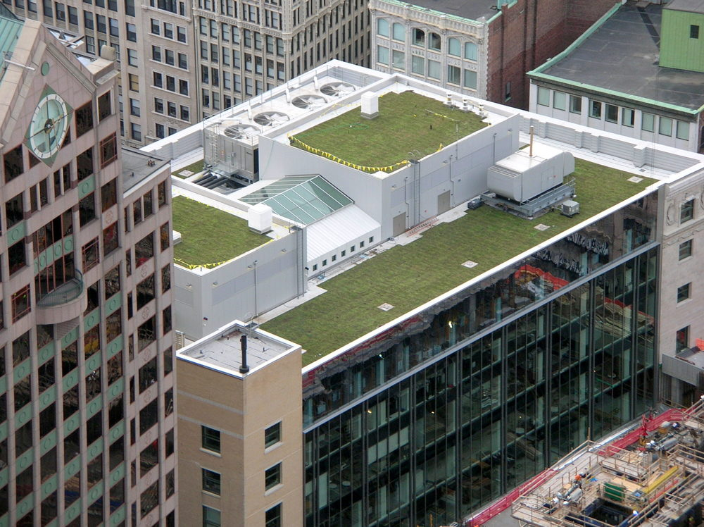 A freshly installed green roof.