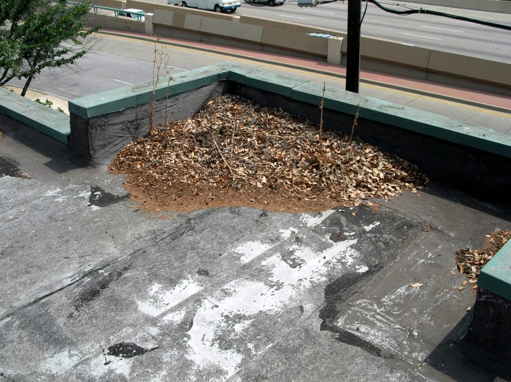 It's important to stop organic debris from accumulating. Among other bad consequences, plants can start to grow, and the roots can penetrate the roof membrane. Now you've got a leak that could have been easily prevented.
