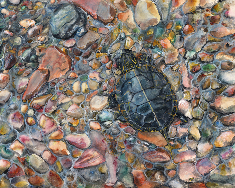 """Painted Turtle"""