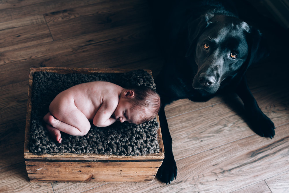 newborn photographer, burlington newborn photographer, babies, newborn, lifestyle photographer,fur babies