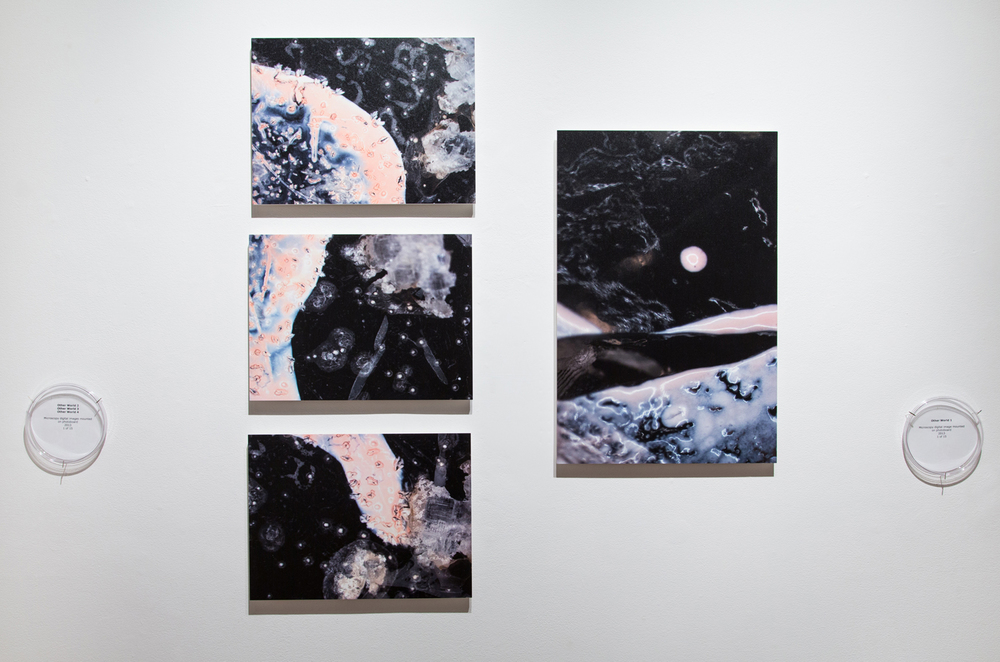 Other World 1-4  (series), 2013 Microscopy digital prints Various sizes