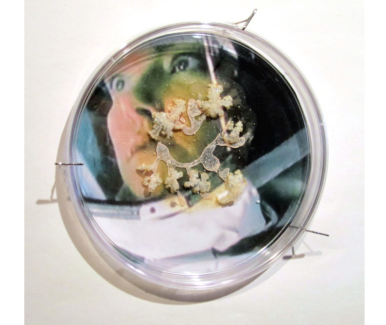 "Andromeda Strain  Petri dish, digital image, agar, Halobacterium, sp. NRC-1 6"" x 6"" x 2"" 2013"
