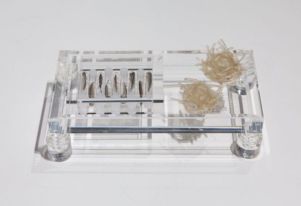 "At Rest: Dwelling,    2018 Plastic tubing, sparrow feathers, test tubes, acrylic trays 6""x12""x3"""