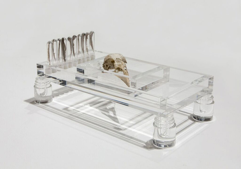"At Rest: Flight  ,  2018 Sparrow feathers, test tubes, Common Raven skull, acrylic trays 6""x12""x3"""