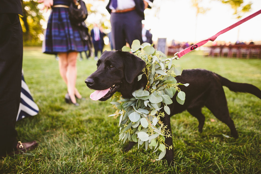 007 - etta the dog waits for the bride and groom to walk down the aisle.jpg