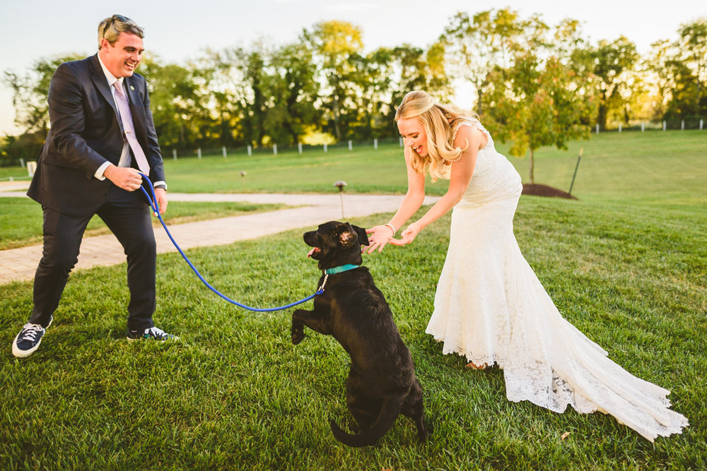012 - bride and groom's dog jumps around playfully.jpg