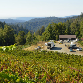 Nelson Family Vineyard