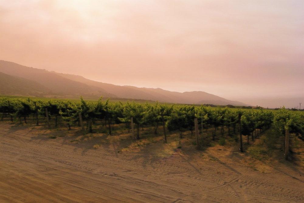 Santa-Lucia-Highlands-Pinot-Noir.jpg