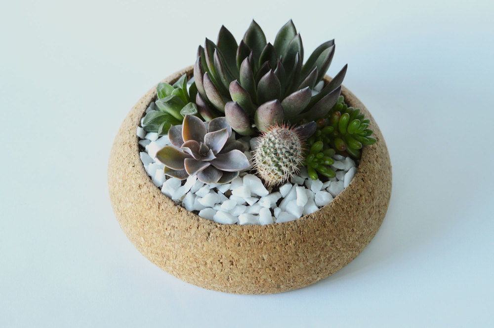 What you will create! Learn the basics of keeping the plants alive and designing a mini landscape!
