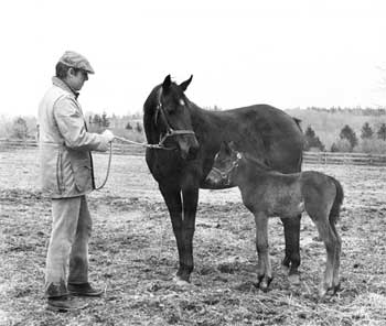 John_Hettinger_with_Mare_Foal.jpg