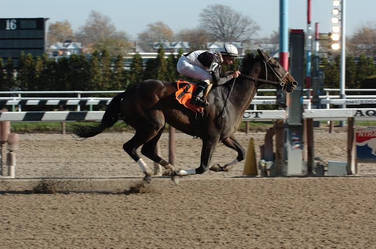 Callmetony winning at Aqueduct, November 20, 2005