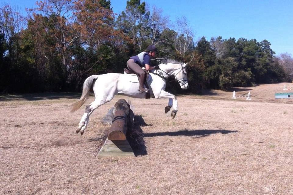 Stud Muffin schooling in South Carolina, winter 2014