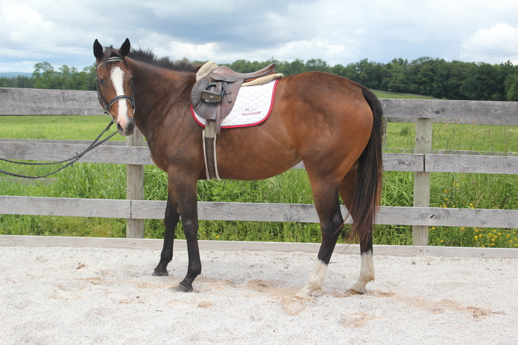 The Cat's Mine retired racehorse ready for adoption through Akindale Thoroughbred Rescue