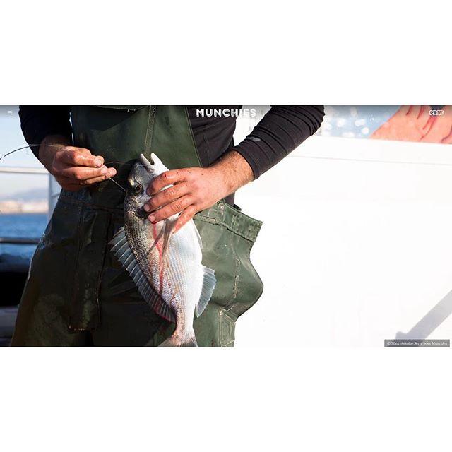 En mer avec les pêcheur marseillais qui pratiquent l'ikejime munchies.vice.com @munchies @vice_france