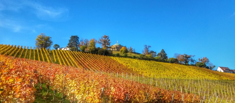 The autumn colors in the vineyards are stunning!