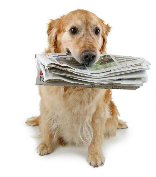 Dog_with_Newspaper.jpg