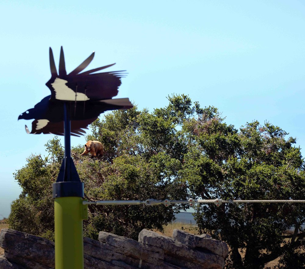 Oakland Zoo.Condor Glider.DSC_8529.web.jpg