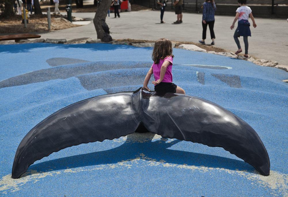 OaklandZoo-63.Opening Day.Whale Fluke.jpg