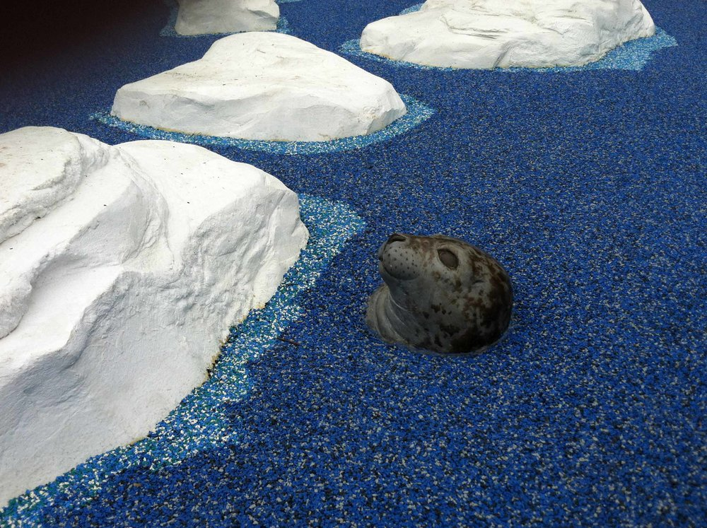 SF Zoo.Playground.Polar Zone.Iceberg.IMG_5052.lo.jpg