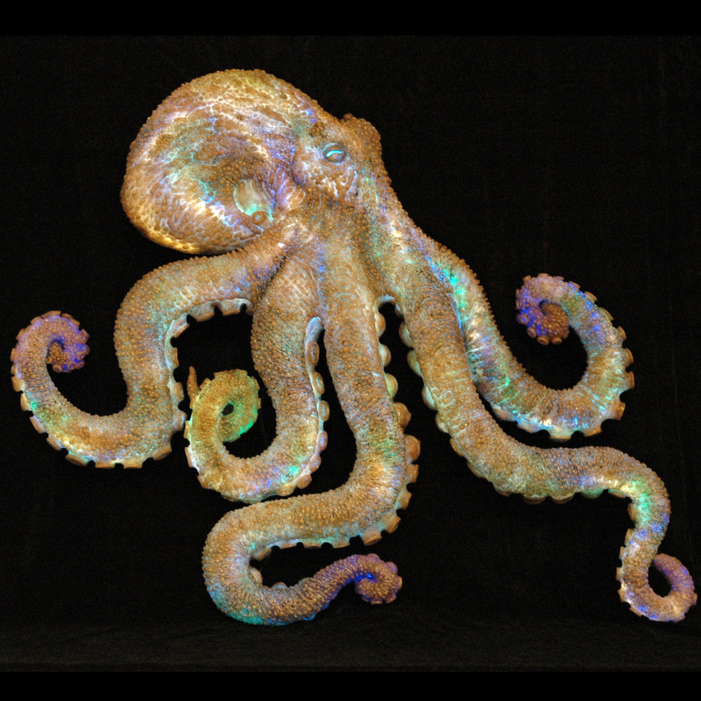 Santa Barbara Museum of Natural History : Ty Warner Sea Center Octopus Sign  Santa Barbara, CA