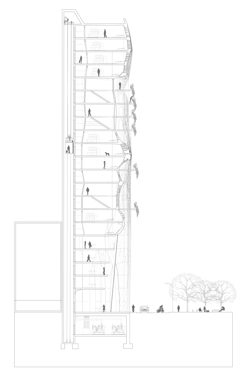Final Transverse Section-01.png
